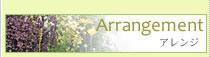 観葉植物レンタル(グリーンレンタル) Arrangement
